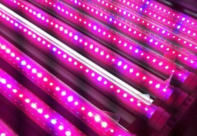 LED, фитолампа