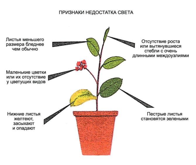 распределение света, цветы