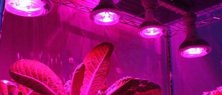 Ртутные лампы для растений