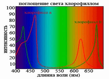 Поглощение света хлорофиллом