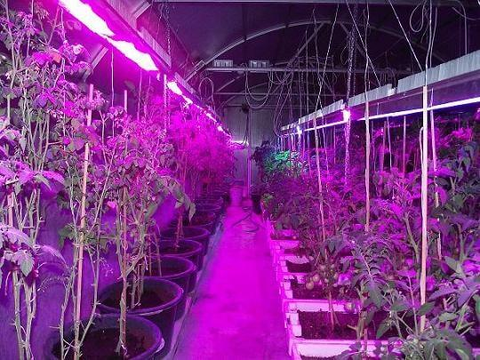 УФ лампа, растения