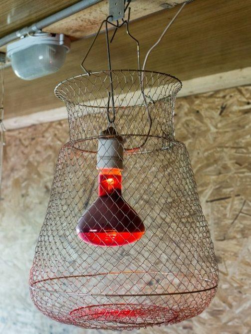Как выбрать красную лампу для курятника и как использовать